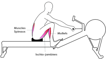 Muscles rameur : phase d'attaque